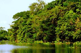 thumb_rinnovabili_biomassa_brazile